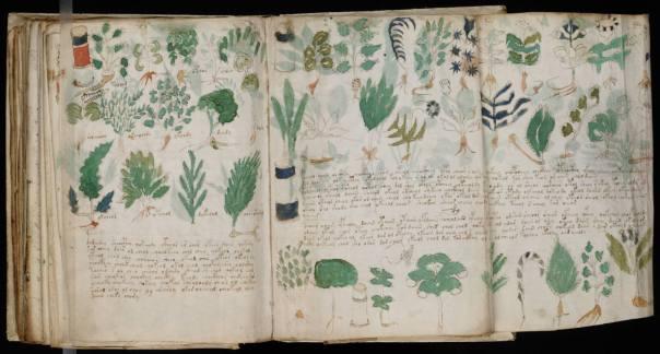 Voynich_Manuscript_(178)